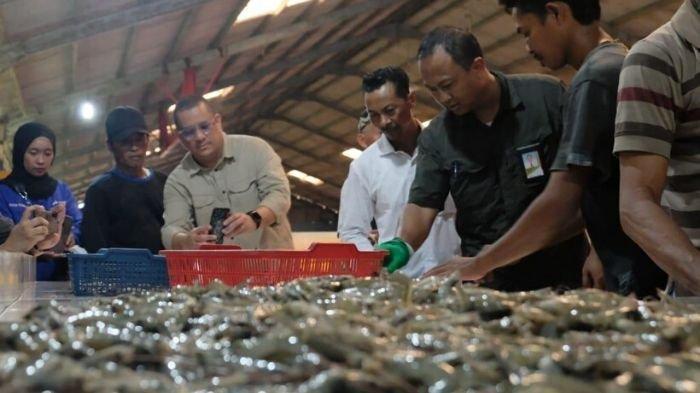 Pertamina Bantu Petambak Udang Bratasena Lampung
